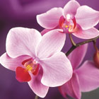 Мастер-класс от Orchid Beauty Center
